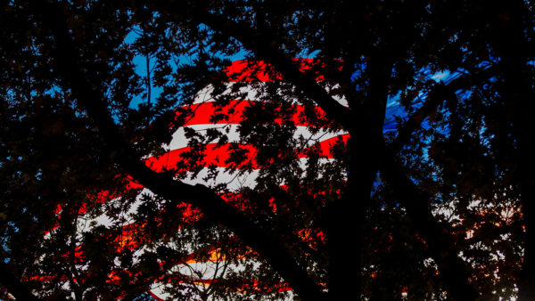 american flag through trees